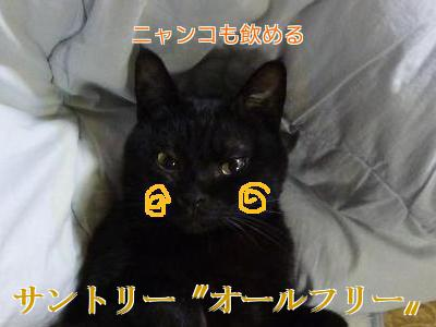 P1090054編集⑥.jpg