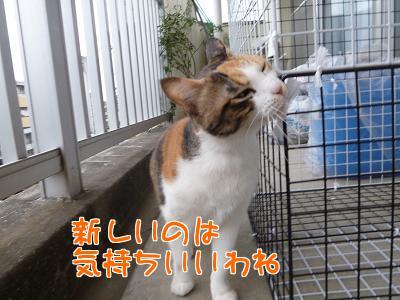 P1090355編集②.jpg