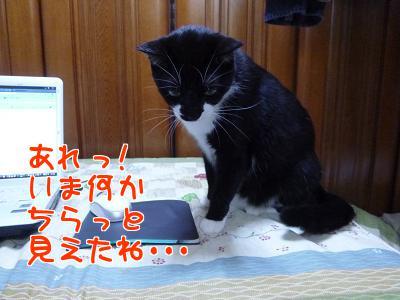 P1090708編集②.JPG