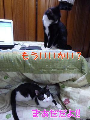 P1090710編集②.JPG