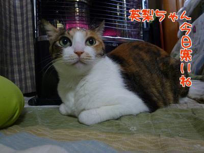 P1110187編集②.jpg