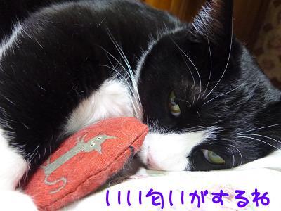 P1110638編集②.jpg