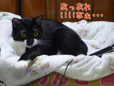 P1120846編集②-1.jpg