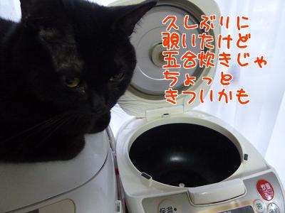 P1140531編集②.JPG