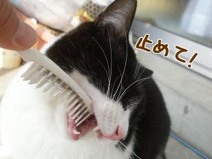 P2063274編集.jpg