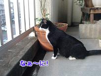 P2113460編集②.jpg