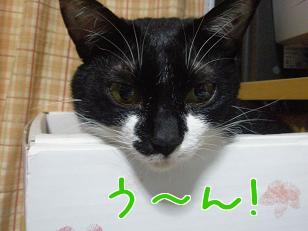 P3290920編集②.jpg