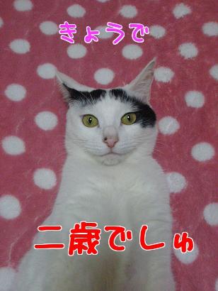 P4061365編集③.jpg