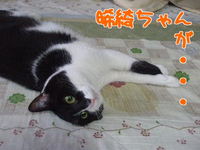 P4081502編集②.jpg