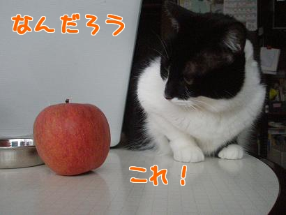 P4171800編集②.jpg
