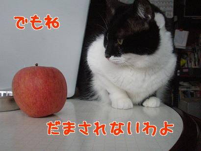 P4171801編集②.jpg