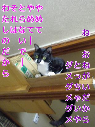 P6013835編集②.jpg