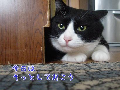 P6054094編集②.jpg