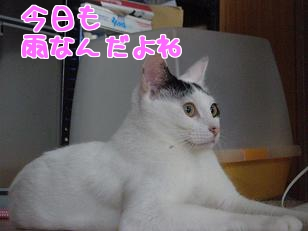 P6054096編集②.jpg