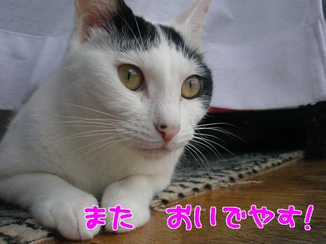 P6154334編集演習.jpg