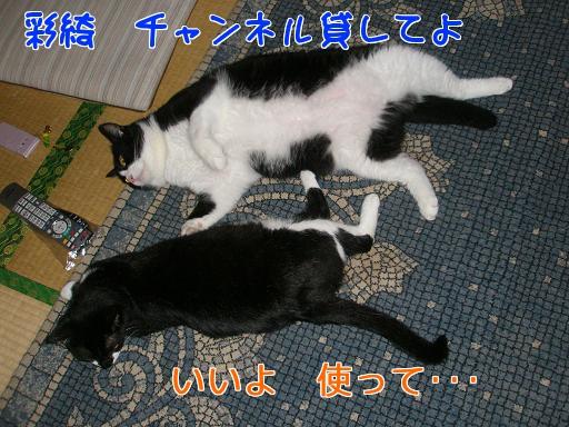 P6244443編集②.jpg