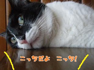 P7215405編集②.jpg