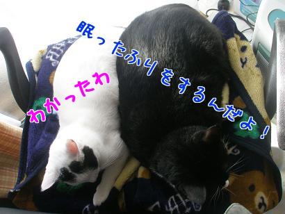PB270521編集②.jpg