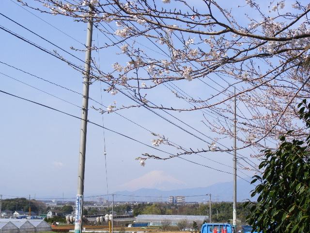 2008_0329桜0061.JPG