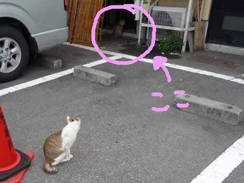 沼津にゃんこ.jpg