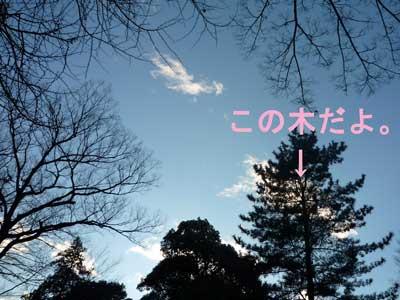 P1010950-のコピー.jpg