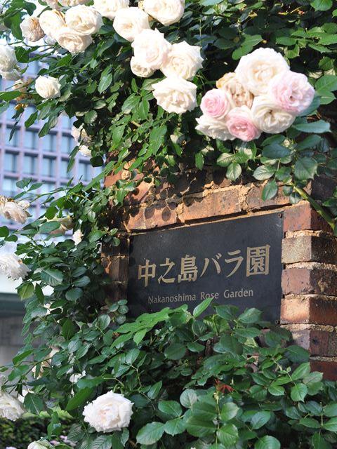 DSC_0548_R.JPG