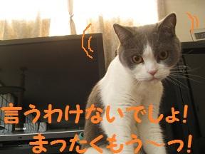あらやだおくさま(4).jpg