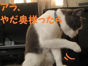 あらやだおくさま (1).jpg
