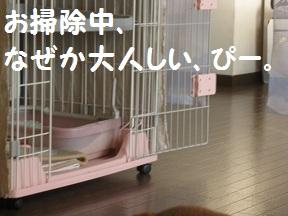 おおそうじでGO (2).jpg