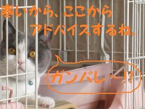 おおそうじでGO (4).jpg