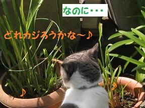 だっておいしいんだもん (2).jpg