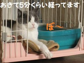 なめるねこ (1).jpg
