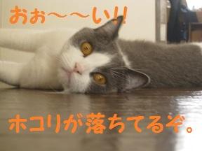 ほこりあるよ (3).jpg