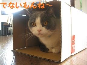 ぼっくすだぁ (2).jpg