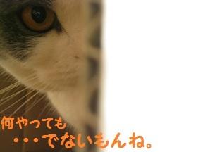 ぼっくすだぁ (4).jpg