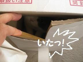 わぁ~びっくり (3).JPG