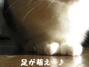 萌えたい? (2).jpg