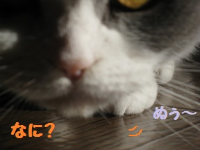 萌えたい? (3).jpg