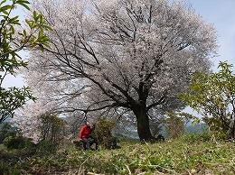 45 4月馬場の山桜.jpg