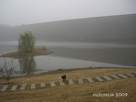琵琶湖 (2).jpg