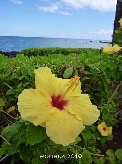 hawaii1 (4).jpg