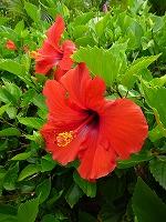 hawaii1 (7).jpg