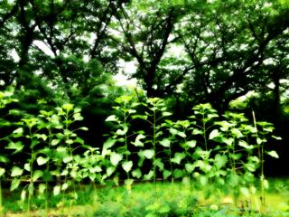 image-20130701082029.png