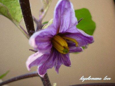 ナスの花.JPG