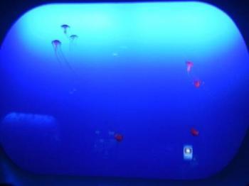 アカクラゲ水槽.JPG