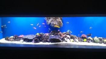 サンゴ礁水槽20131126.jpg