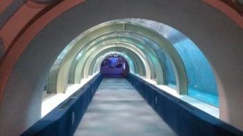 トンネル水槽20131126.jpg