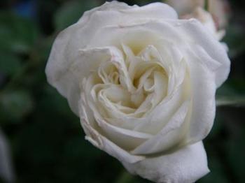 ビー別の花20120513.JPG