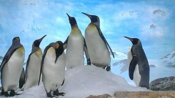 ペンギン20131117.jpg