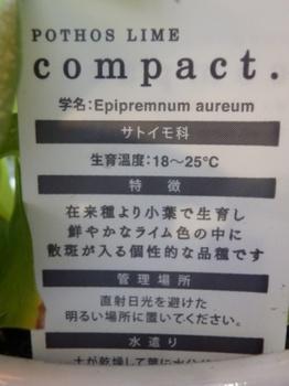 ポトスライムコンパクト札裏20140119.JPG